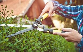 Home Essentials & Gardening